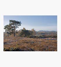 Holt Heath Photographic Print