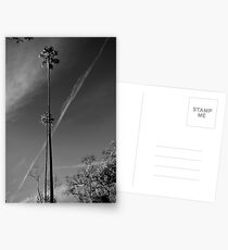 Palms Noir with Contrails Postcards