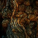 Tree Trunk with Burls by Syd Weedon