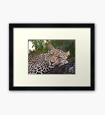 Nyaleti Young Male 2-3 Framed Print