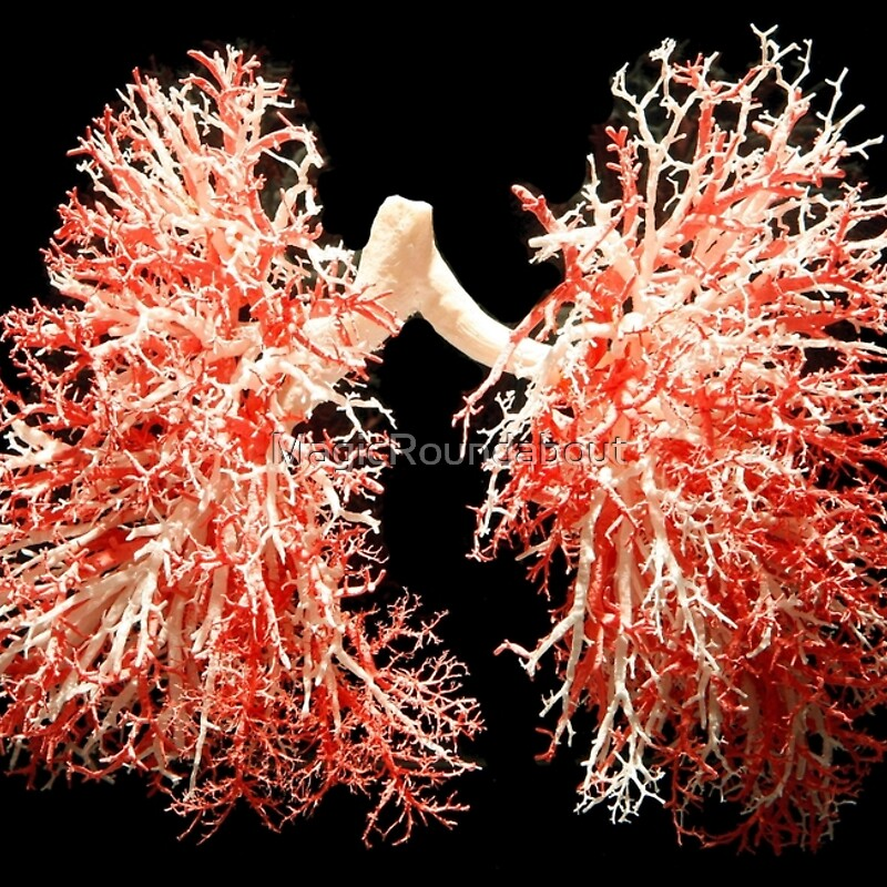 Image Gallery real lungs