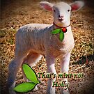 That's Mint Not Holly! by Kym Howard