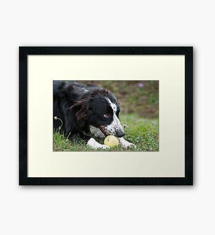 My ball!! Framed Print
