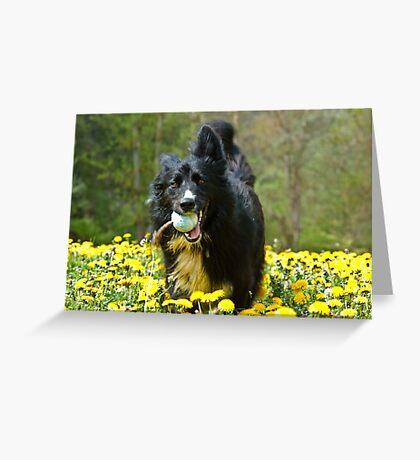 Dandelion Fun Greeting Card