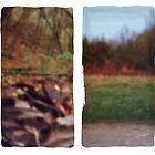 Pinhole Experiments in Autumn: Diptych by rosiephoto