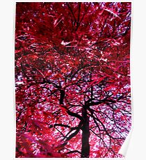 Under the Red Maple Poster