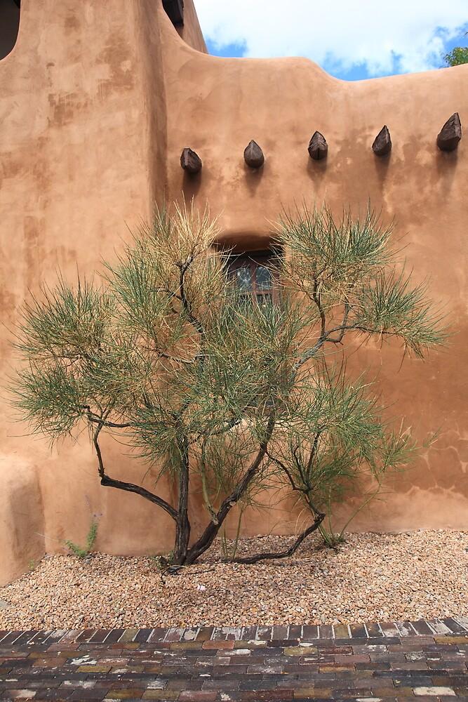 Santa Fe - Adobe Building and Tree by Frank Romeo