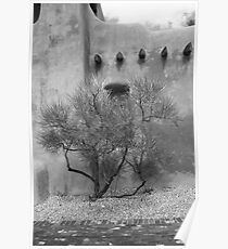 Santa Fe - Adobe Building and Tree Poster