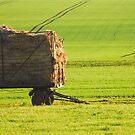 Hay Cart by vbk70