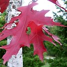 Red Leaves by Lorrie Davis