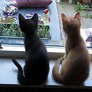Looking out the window by ienemien