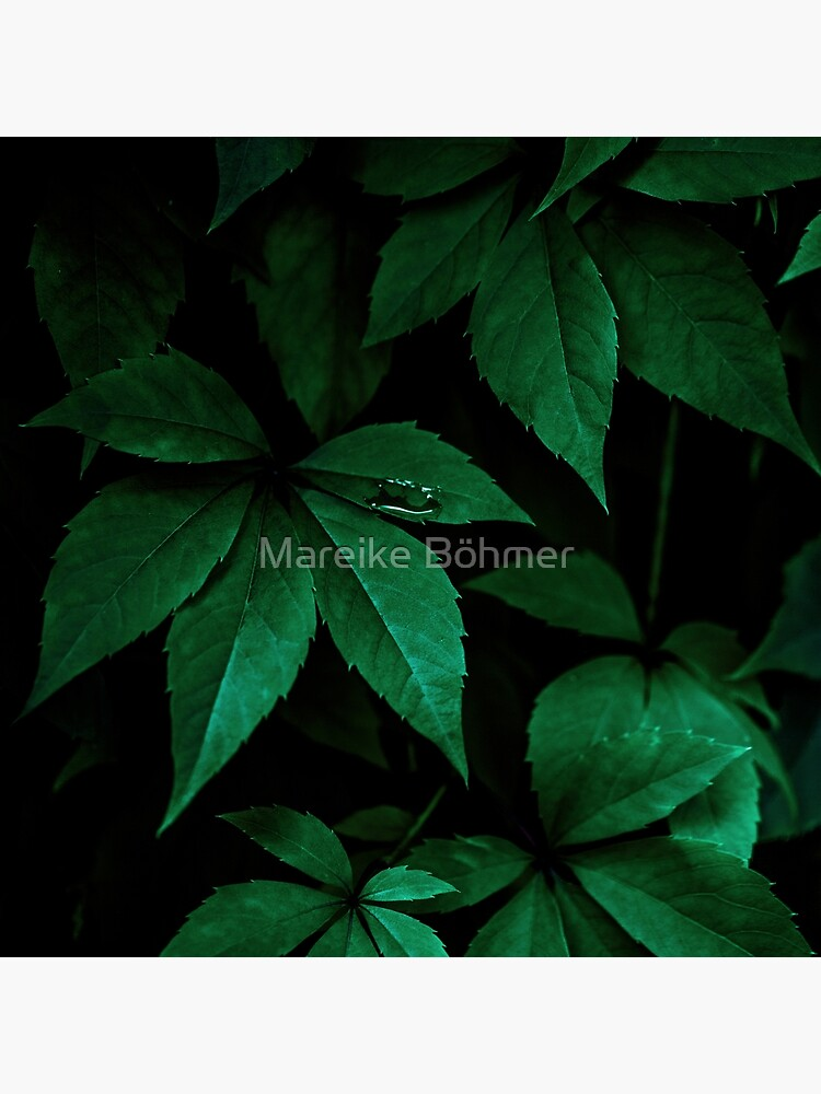 Dark Leaves 7 by MarBoe