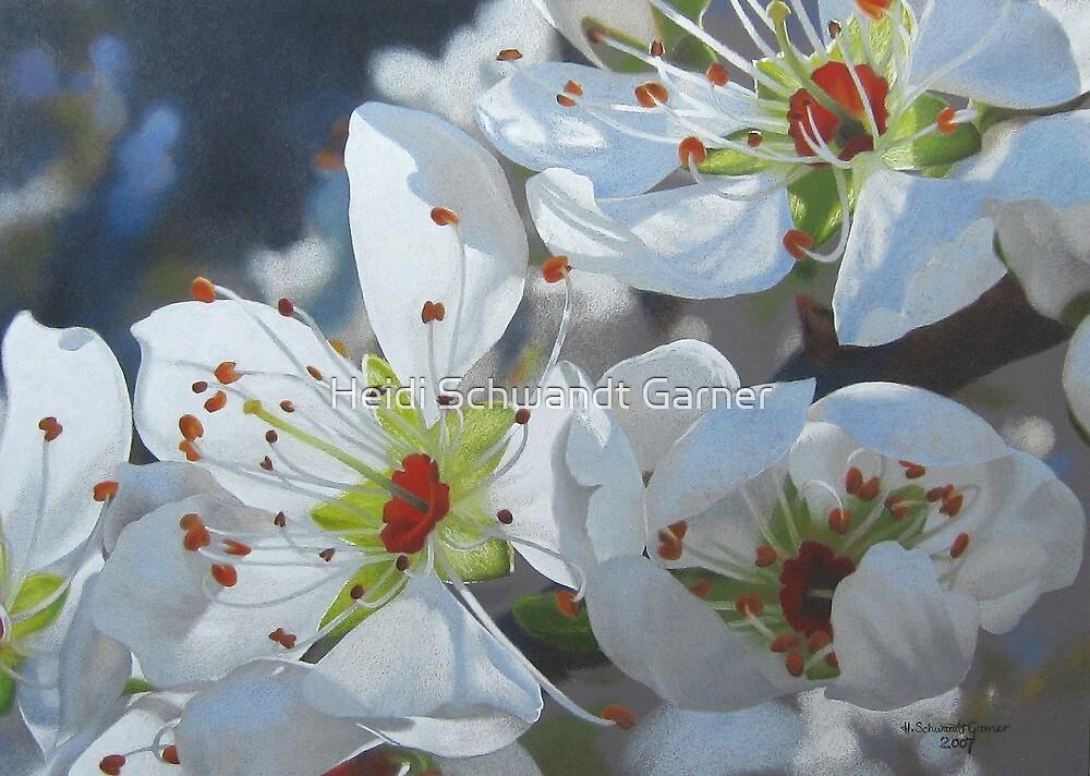 Blossoming by Heidi Schwandt Garner