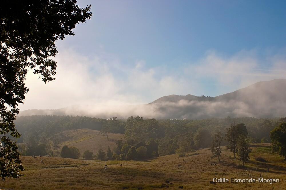 Morning Mist #2 by Odille Esmonde-Morgan