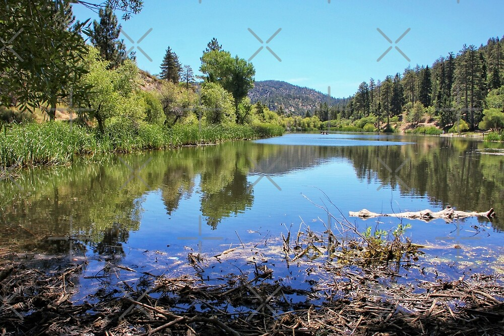 Jackson Lake by CarolM