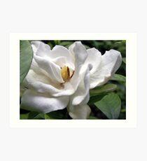 Cotton White Petalscape Art Print