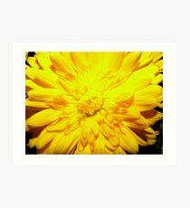 Bright Yellow Mum Art Print