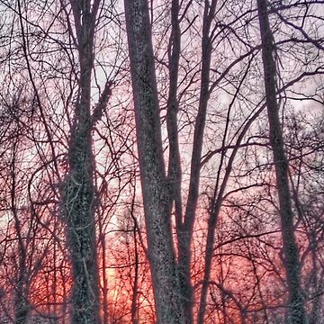 Sunset Forest by CleanSlate