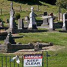 Enough said!, sign, Banks Peninsula, NZ. by johnrf