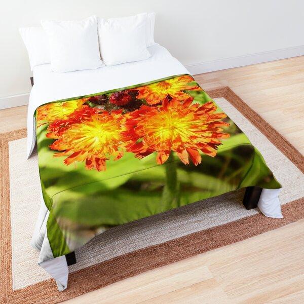 Hawkweed Comforter