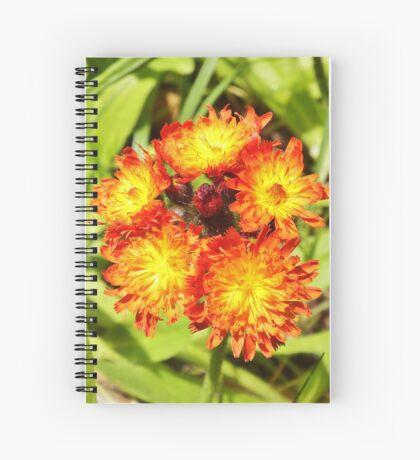 Hawkweed Spiral Notebook