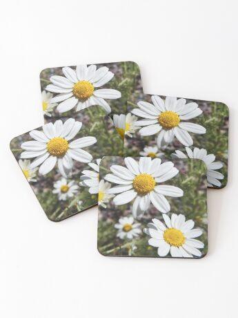 Mayweed wildflower Coasters