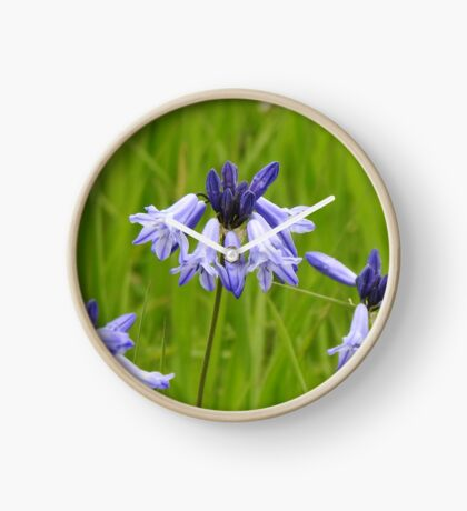 Wild Hyacinth Wildflower Clock