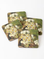 Pearly Everlasting Wildflowers Coasters