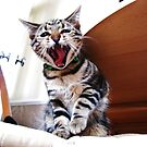I`m a cat get me outta here!!! by Ladymoose