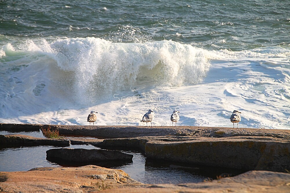 'Da Boyz Watchin' Da Waves' by Scott Bricker
