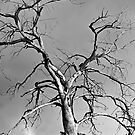 Spirit Tree by Gregory J Summers