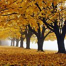 Foggy Autumn Morning by KerrieLynnPhoto