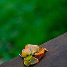 Leaf by KerrieLynnPhoto