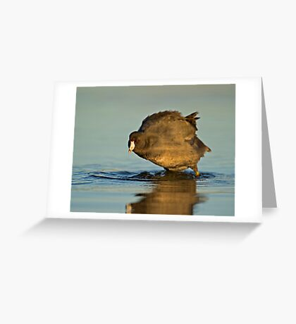 Coot with Attitude Greeting Card
