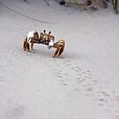Crabby by KerrieLynnPhoto