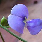 Lavender by Akash Puthraya