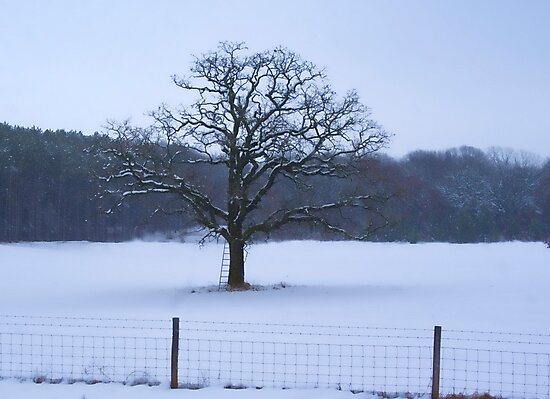 LADDER TREE IN SNOW STORM by pshootermike