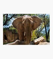 Elephant Portrait Photographic Print