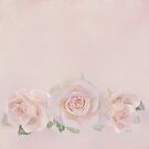 THREE ROSES ON MAUVE BACKGROUND by Shirley Kathan-Sayess