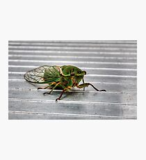 Cicada in HDR Photographic Print
