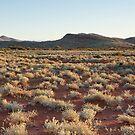 Habitat of so Many by Steven Pearce