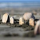 Seashells -Ohope Beach NZ by paua