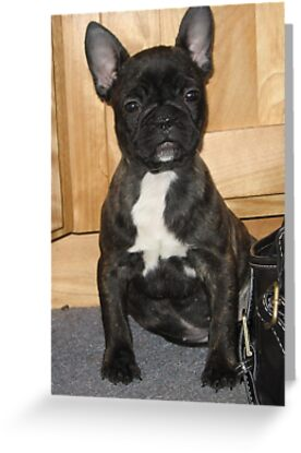 Pug French Bulldog Puppy by silverdragon