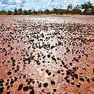 Blackstone Claypan by Steven Pearce