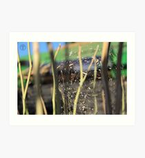Spider in the Stubble Art Print