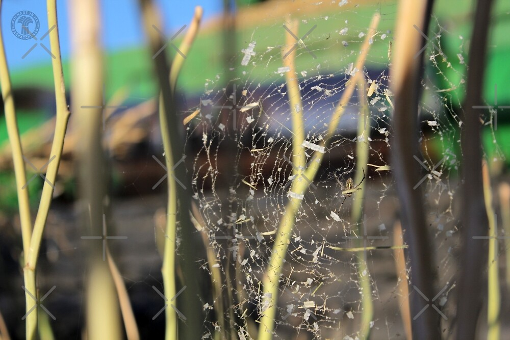 Spider in the Stubble by madeinsask