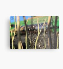 Spider in the Stubble Metal Print