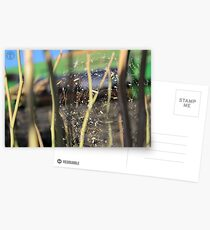 Spider in the Stubble Postcards