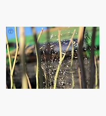 Spider in the Stubble Photographic Print