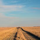 Swathing Straight Ahead by madeinsask